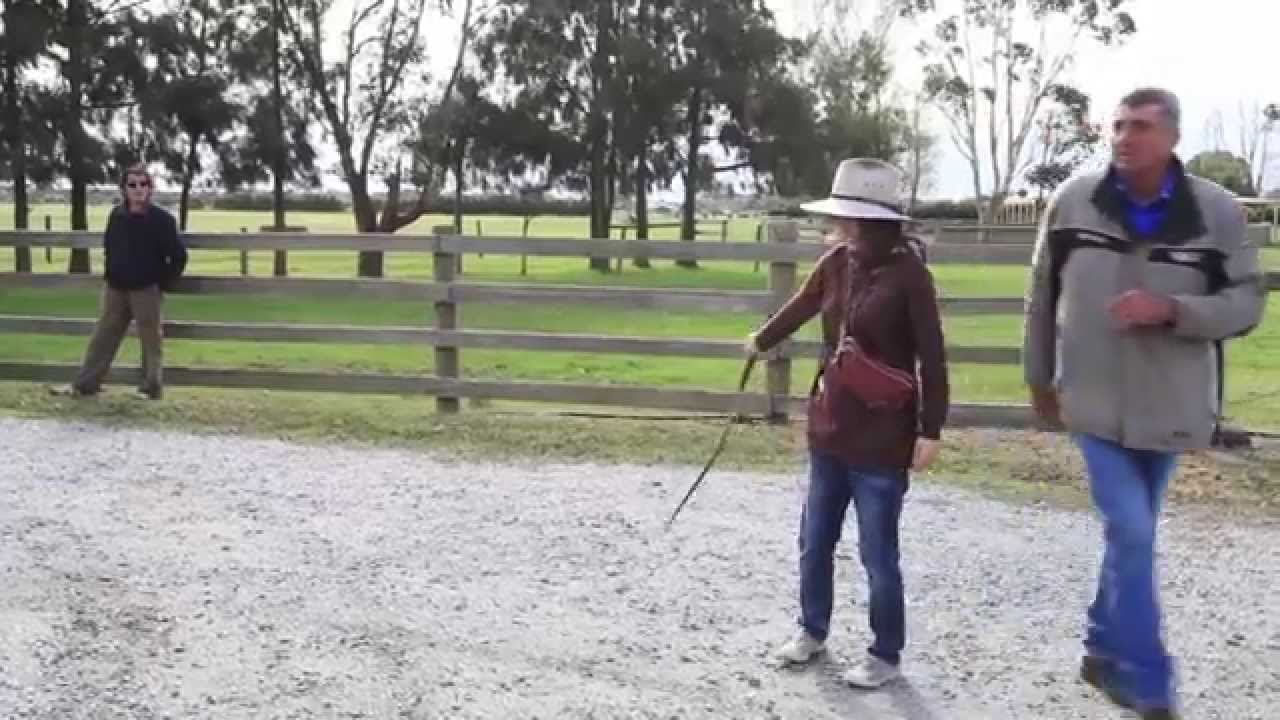 Farm Stock Whip Cracking