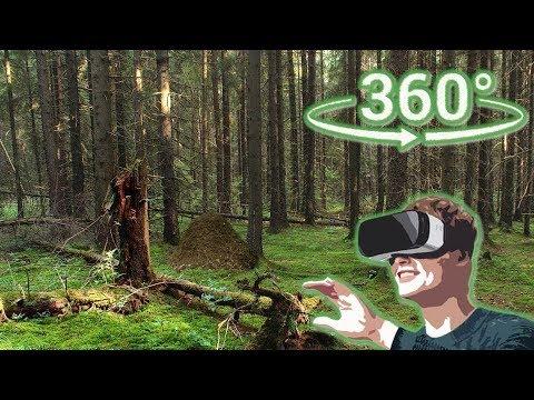 Панорамное Видео 360 VR 4K для очков виртуальной реальности. Лето, гуляю по лесу... крастота!