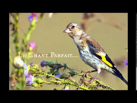 Le Chant Parfait Pour Vos Jeunnes Maknine 2015 Mixage [Moi-Mén]