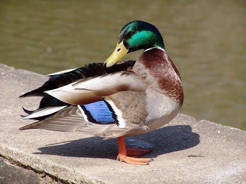 شوف وانسى همومك (914)  نطه البطه