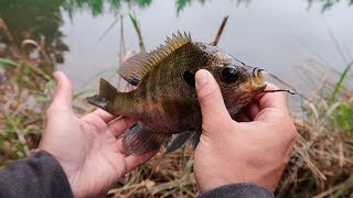 Fishing With GIANT Livebait (HUGE BASS)