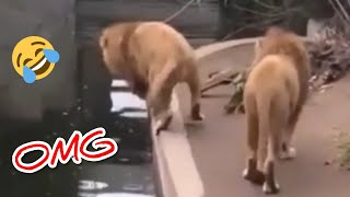 Funny And Cute Puppies Compilation