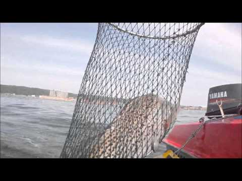 Bay Fishing Durban Harbour