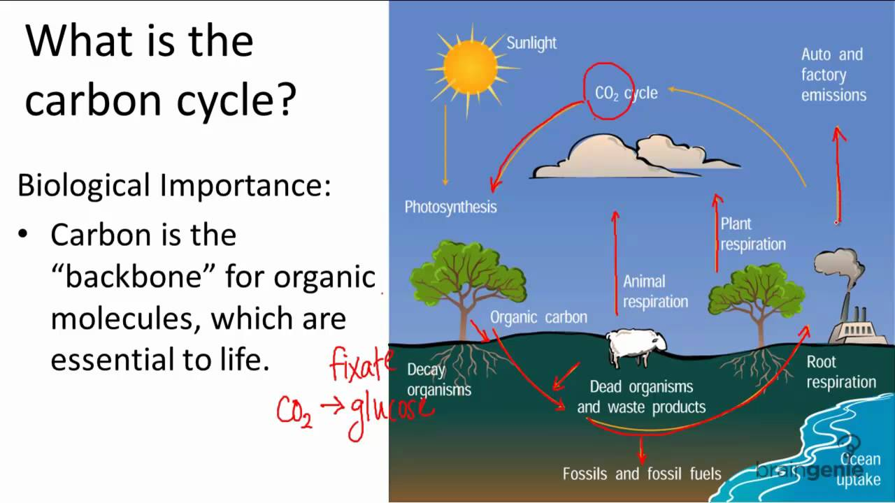 17 1 2 what is the carbon cycle