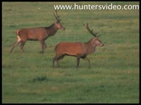 the-hunters-poland-hunters-video.html