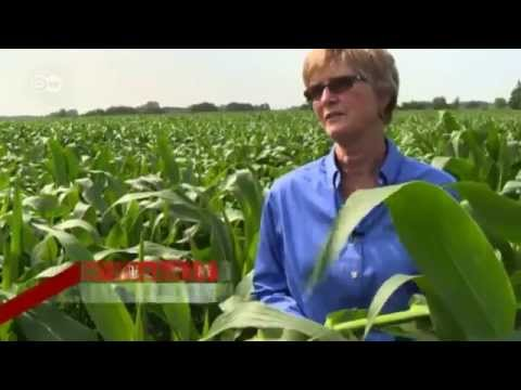 GM Corn for Europe | Made in Germany