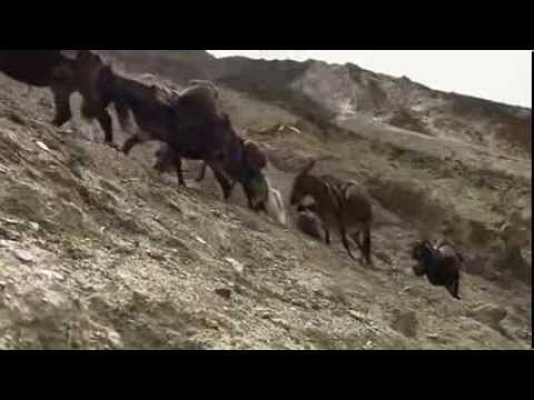 Korean documentary on the caravan trade in Tibetan ponies for Chinese tea