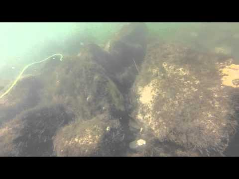 Snorkeling the Jetties JP Luby Corpus Christi, Tx