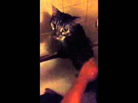Wet Pussy Xd video