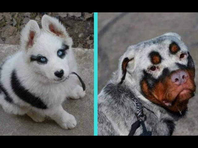 31 Unique Dogs With Unbelievable Fur Markings