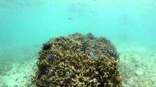 沖縄 シュノーケリング 大度海岸 礁池 Point D  snorkeling underwater video odo beach  at Okinawa island