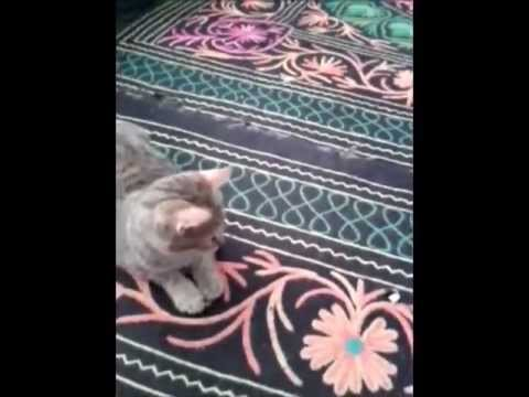 Funny Cat- Seeing everything as a rat.