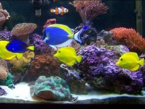 P p tropical fish beautiful salt water fish tank marine for Marine fish tanks