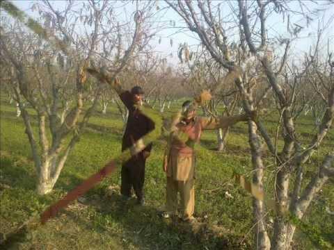 Ghazala Javed Orignal Death Video  0336 1945941 video