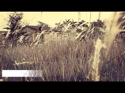 Noe Letto - Pelangi di langit senja (short video)