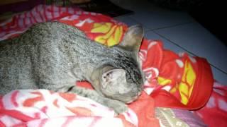 Kucing ngedot