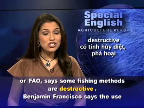 Anh ngữ đặc biệt: Decreasing Fishing Stocks (VOA)