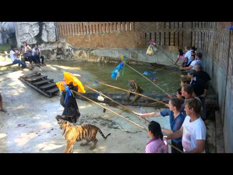 Tiger Temple Tours from Bangkok