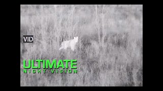 Thermal Bobcat Hunting with the ATN ThOR 640 5X