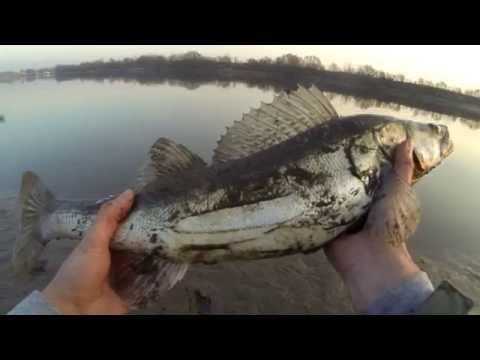 рыбалка на наркомводе
