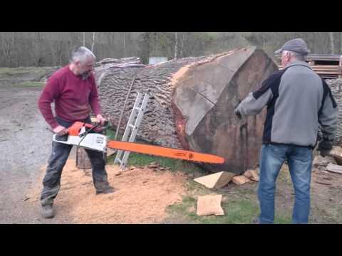 Stihl ms 880 150cm vs big oak log