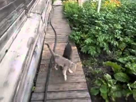 Perros - Un perro que recoge al gato y lo mete en casa