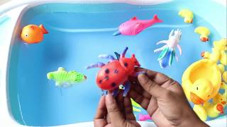Sea Animals Wild Zoo Animals Farm Animals Learn Animal Lots of Animals for Kids Education Video
