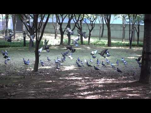 임시연 비둘기 초고속카메라 04