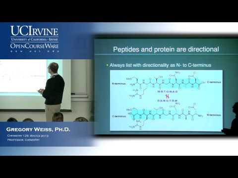 Intro to Chemical Biology 128. Lecture 10. Proteins and Amino Acid Conformations.
