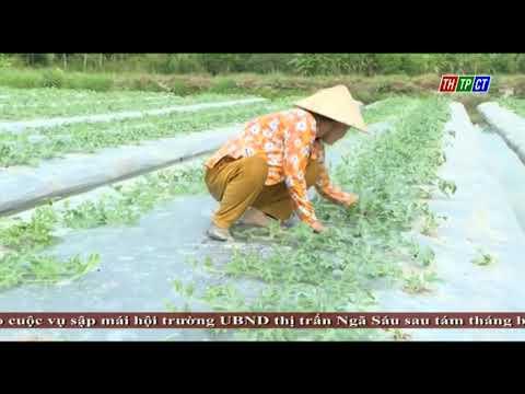 """Bình Thủy tổ chức Lễ ra mắt mô hình """"Phụ nữ tham gia sản xuất sạch và an toàn"""""""