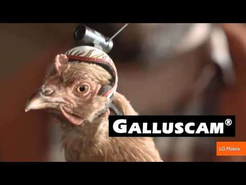 The Stabilization Power of Chicken Heads Featured in New Commercials