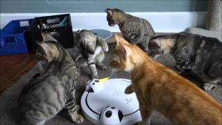 The FroliCat Pounce Review