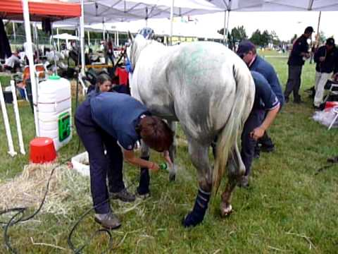 Waterboy horse shower