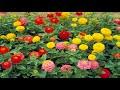 Flowers In Full Bloom (HD1080p)