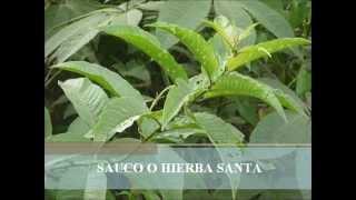 PLANTAS DE LA SIERRA II.wmv