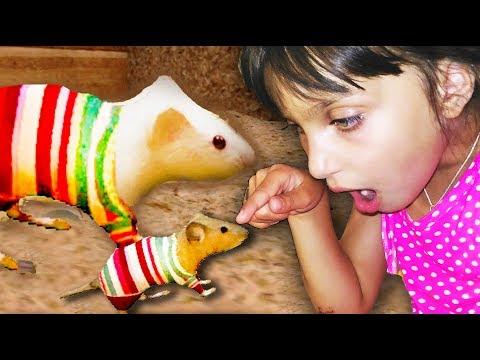 СИМУЛЯТОР Маленькой МЫШИ #4 РОДИЛСЯ МЫШОНОК  напала кошка видео для детей детский летсплей Валеришка