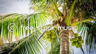 Coconuts by MBB [ Electronica / EDM / Tropical House ]   free-stock-music.com