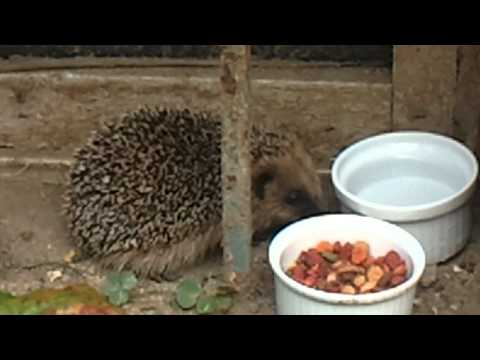 Video-2011-09-21-12-51-13.3gp video