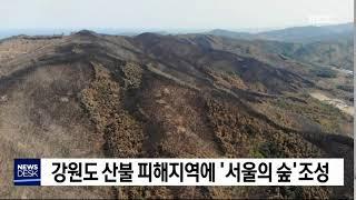 강원도 산불 피해지에 '서울의 숲' 조성