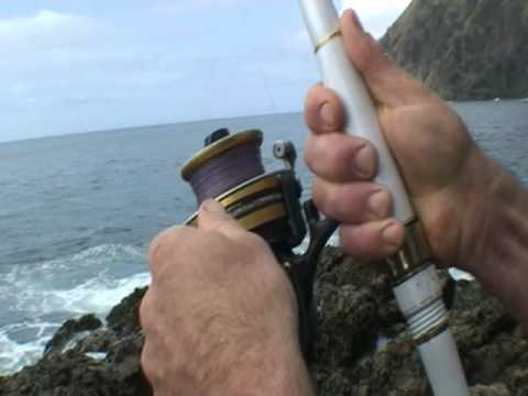 landbased fishing comp + far north + snapper + kingfish + rock fishing
