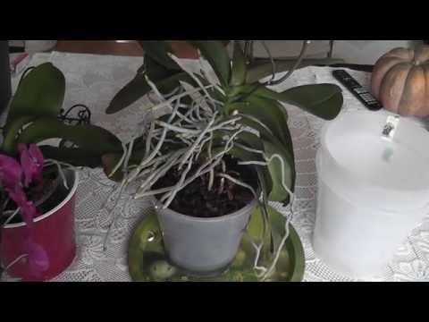 Новые горшки для орхидей Срочно пересаживаю