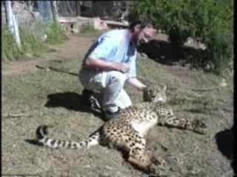 Juf op reis: Cheetah's