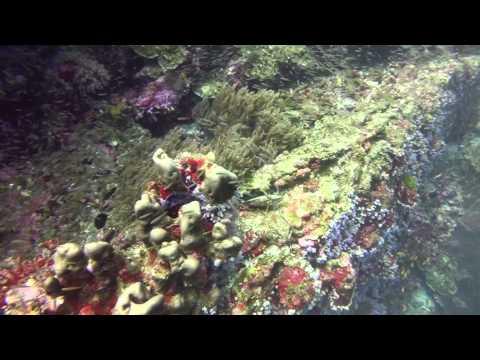 Diving in Surin & Similan National Parks