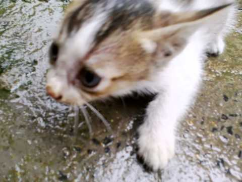 My Pusy Cat video