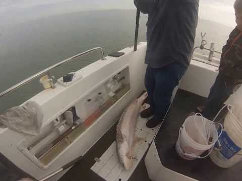 San Francisco bay herring netting and sturgeon fishing