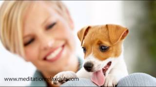 Sleep Music for Pet Therapy: Paw Friends