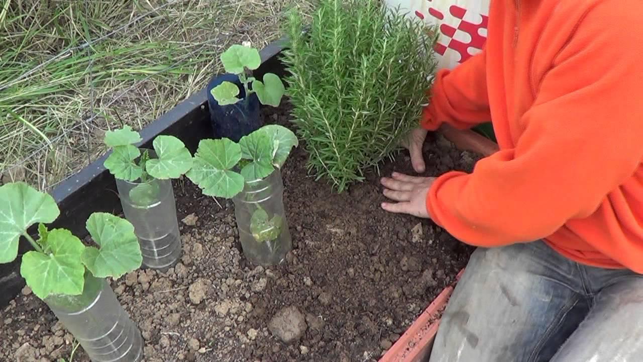 Como y porque plantar romero en la huerta huerta for Huerta de aromaticas en macetas