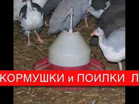КОРМУШКИ ДЛЯ ЦЫПЛЯТ КУР БРОЙЛЕРОВ