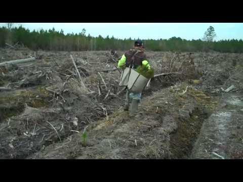 Lowcountry Tree Planting