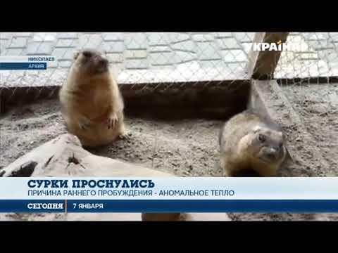В Николаевском зоопарке проснулись сурки